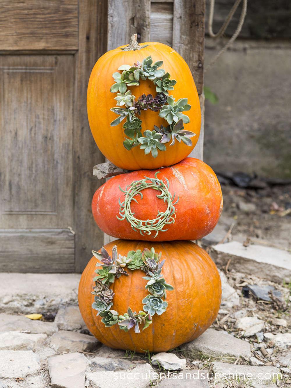 Fun Pumpkin and Succulent Craft | Succulents and Sunshine  | Pinterest Picks - No Carve Pumpkin Ideas