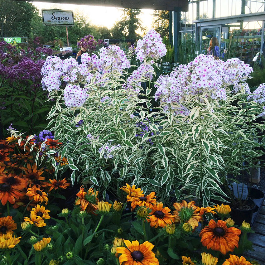 Gorgeous plants at Swansons Nursery Ladies Night Out