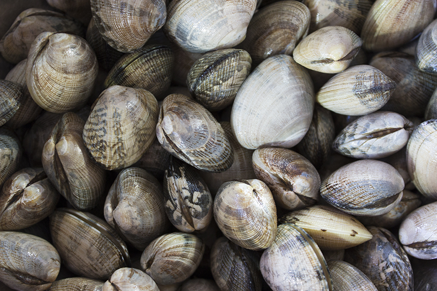Clams for clam broth with garlic and tomato