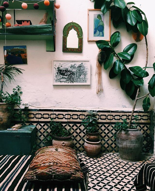 boho room inspiration with rubber plant we