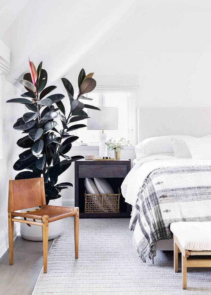 White Hot - Erin Fetherston's New Hollywood Home | Domino - Rubber Plant Inspiration